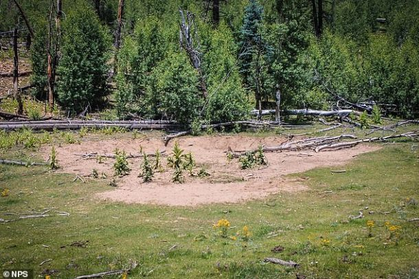 According to officials, the defeat is caused by concerns about ecological impacts due to pushing through dense forests, intensive grazing and thinking around the edge of the canyon