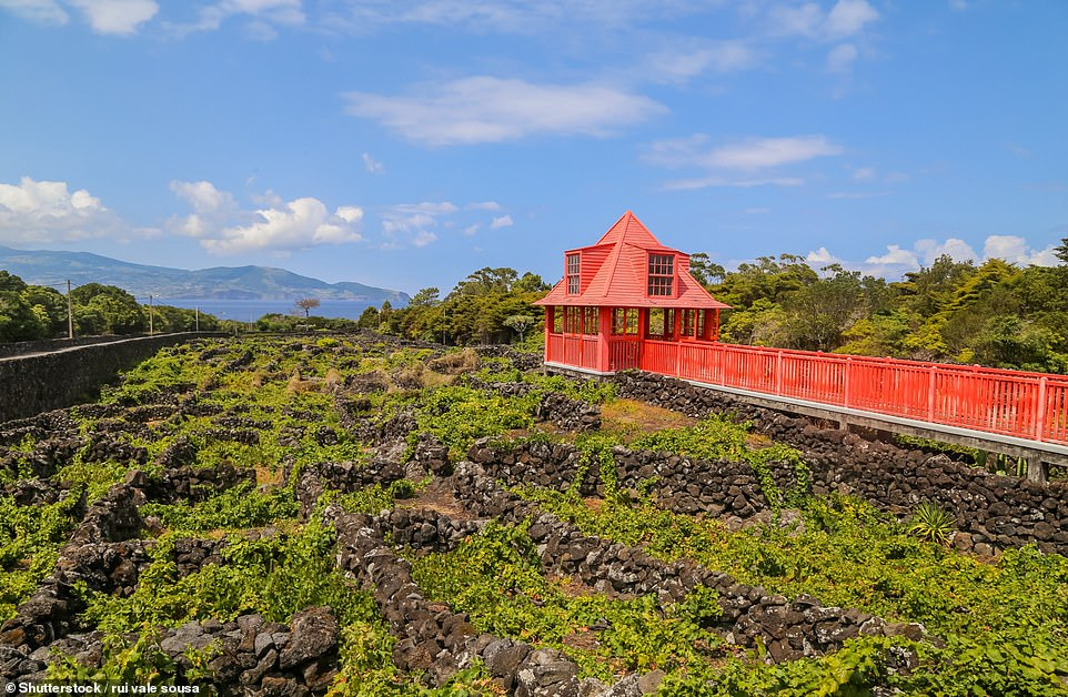 Pico's wine museum, whereyou can see the ruts left by the wheels of grape-laden ox carts on the black lava ground
