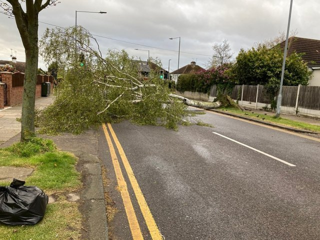 A tree came crashing down in Southend, Essex, today as high winds battered parts of England and Wales yesterday and overnight