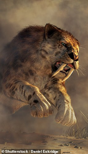 Pictured: an artist's impression of a Smilodon pouncing