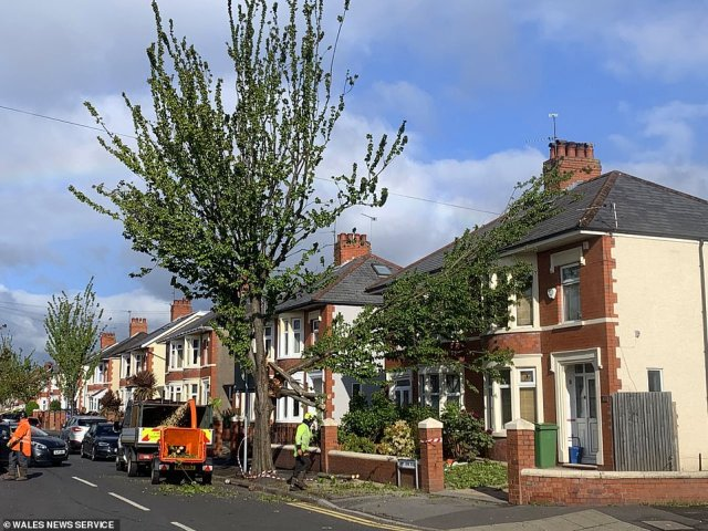 The wind swept in as the Met Office issued a yellow weather alert, warning of disruption to travel. Bridges were later closed, tress were blown over and properties were damaged due to high winds. Pictured: Workers remove a tree which had fallen onto a house in Cardiff, Wales