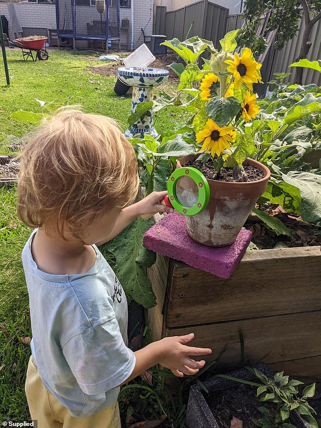 Soil with high levels of lead can stunt children's brain development. Pictured: Orion, 3, looking at his vegetable patch