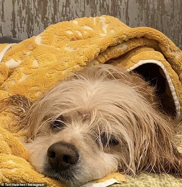 Adorable: The actress also included a photo of her dog drying off wrapped in a yellow towel