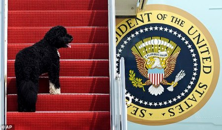 Obamas' Family Dog Bo Dies Aged 12 From Cancer: Heartbroken Former President Calls Him a 'True Friend and Loyal Companion'