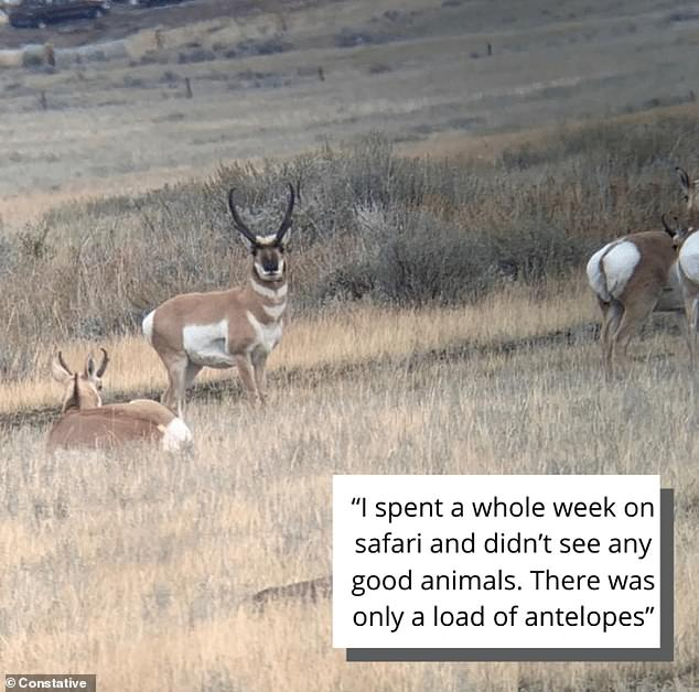 Safari not so goody - A tourist who had booked a safari regretted they only had seen antelopes and no 'good animals'