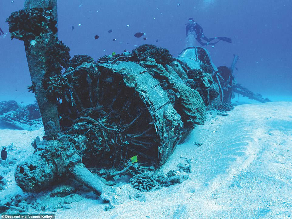 VOUGHT F4U CORSAIR, OAHU, HAWAII: A diver hovers peacefully over the wreck of a Vought F4U Corsair. The author explains: 'Although this particular aircraft was a veteran of World War II, it actually ended its flying career in 1948, when a routine flight ended in engine failure and ditching. The pilot was unharmed and was later rescued'