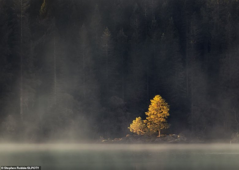 Stephen Robbie was named the competition's overall runner-up with his portfolio of three pictures. One of them is this stunning image of Loch Ard in the Trossachs. He explained: 'As the thick autumnal mist finally lifted on a still morning, a single tree on an isolated islet caught the first light from the sun breaking over the surrounding hills'