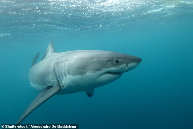 A man has been attacked by a shark (not pictured) and is in a serious condition