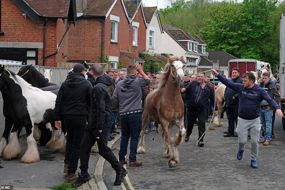 A man is pictured leading a brown coloured horse away on a lead rope from the fence where other animals are tied
