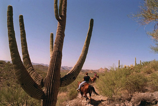 The Sonoran Desert, which borders the US and Mexico, can also reach extremely high temperatures, although this happens less frequently than in the Lut Desert, likely due to its low elevation