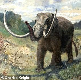 Pictured: a reconstructed Mastodon