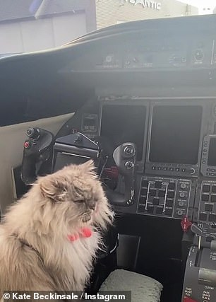 Captain Clive: The grey cat looked completely disinterested in his new role as a pilot while Kate could be heard giggling in the background