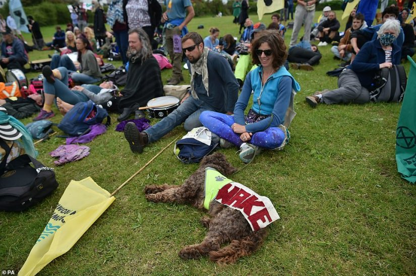 Even the animals were forced to get involved with a dog pictured enjoying a quick rest by its owners in St Ives