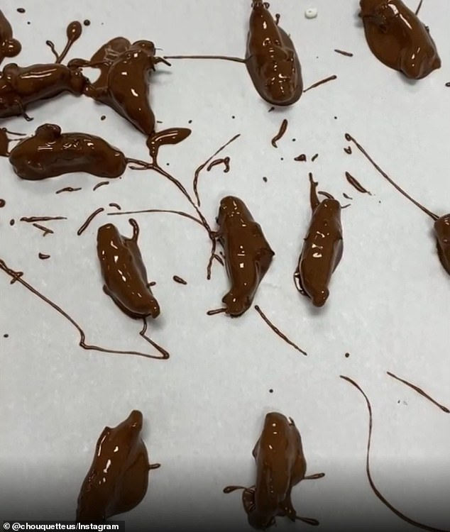 The cicadas are collected from nearby in Silver Spring, Gaithersburg, and Potomac, and the shop says it takes about three to five days to move to the top of the wait list