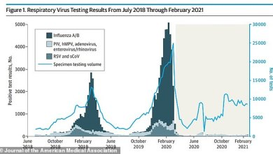 Influenza and other seasonal virus cases fell from 4,800 per month in 2019 to just TWELVE last year