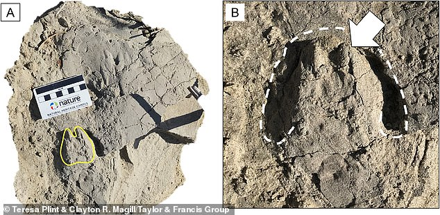 Researchers from Heriot-Watt University found three ancient animal foot prints in Tanzania believed to be almost two-million years old