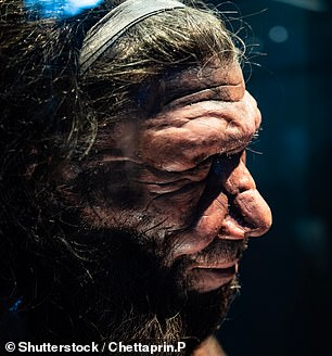 The remains of Neanderthals (pictured) have also been found in the cave — along with the bone from a child whose DNA indicated that it had a Neandertal mother and Denisovan father