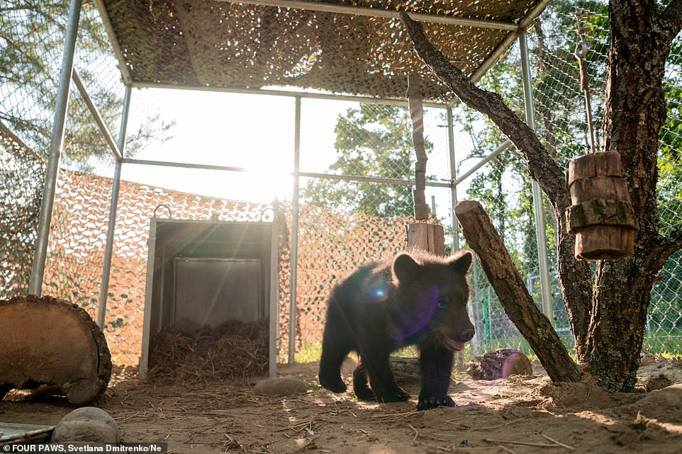 All bears have spent most of their lives in a concrete enclosure, underfed and unable to express their natural behaviour