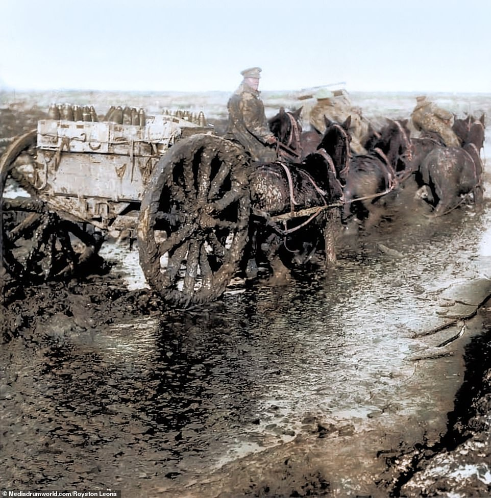 A wagon hauling artillery is caked in mud as it transports supplies across the Western Front in October 1916. Eight million horses, donkeys and mules who died on all sides during the First World War. They were the only viable option for covering the harsh terrain as track vehicles which would be deployed in WWII were still in their infancy and very expensive