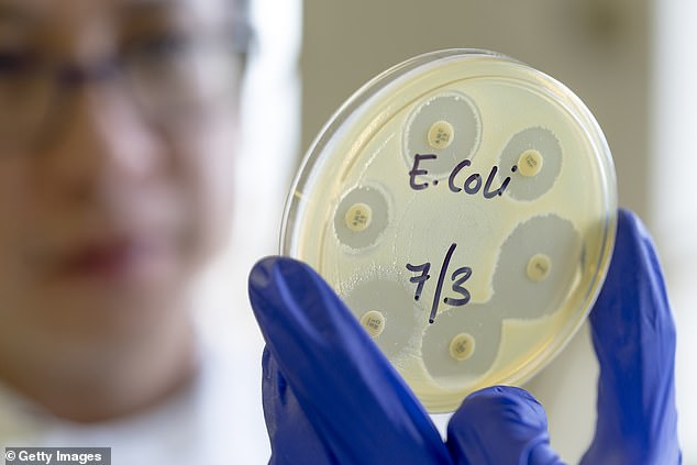 The enzymes used were from E. coli MG1655 RARE (reduced aromatic aldehyde reduction), a form of the bacteria genetically engineered to be benign
