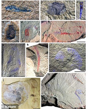 The sheer volume of eggs, larvae and juvenile specimens suggests that, 518 million years ago, the deeper waters near the center of the Kunming Gulf offered offspring protection from ocean currents, predators and other hazards