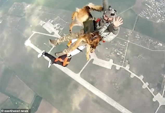 The dogs can jump with a parachutist, or with both the parachutist and a dedicated handler
