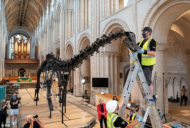 Lead technician Andrew Wahl puts the finishing touches to Dippy the Diplodocus, the Natural History Museum's famous diplodocus cast