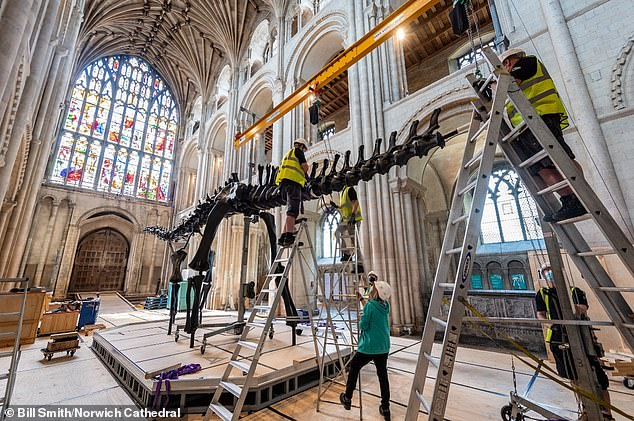 Dippy being built in Norwich Cathedral's nave. The visit to Norwich marks the first time the dinosaur has ever been displayed inside a cathedral.