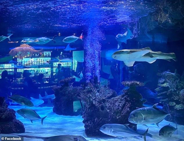 Downtown Aquarium is a 500,000 gallon aquarium and entertainment venue including a full-service restaurant, an upscale bar, a ballroom, and amusement rides