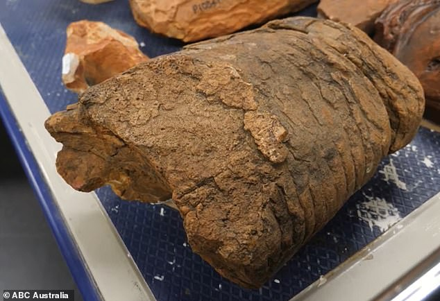 The Endoceras fossil (pictured) had been in the collection of the Museum and Art Gallery of the Northern Territory for years before curator Adam Yates stumbled across it when the institution was moving items to its new Alice Spring digs at Megafauna Central