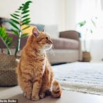 A pet owner is facing charges by the RSPCA after starving her cat and locking it inside for weeks 💥👩💥