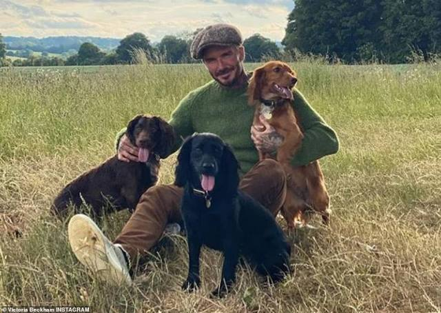 Animal lovers: The council also requires the Beckhams to submit a five-year maintenance plan to show how they will support the area's biodiversity