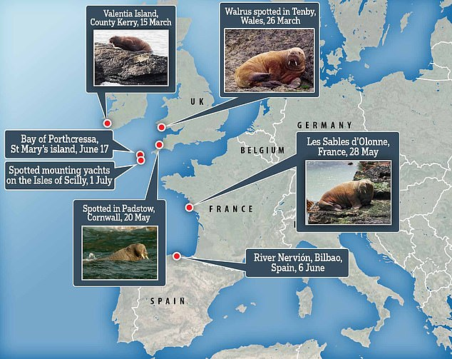 It is believed that Wally arrived in the Isles of Scilly after travelling 2,500 miles along the coast of western Europe, including Spain, Wales and Cornwall over the last four months