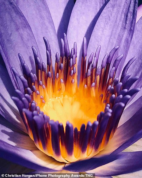 Pondering the Positives: A blooming flower is pictured in Perth, Australia by Christian Horgan