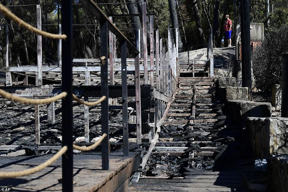 A man stands between burned trees in Kryoneri, in northern Athens