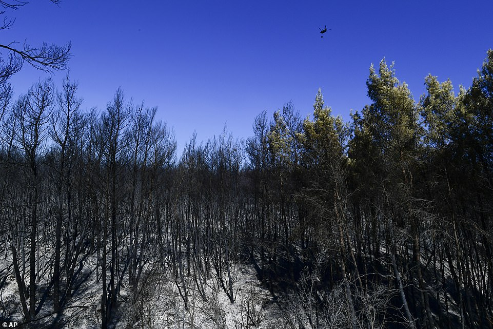 A helicopter flies above burned forest in Kryoneri this morning