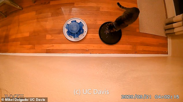 It's unclear why cats freeload for their food, but it may be because some cats prefer to use natural hunting instincts
