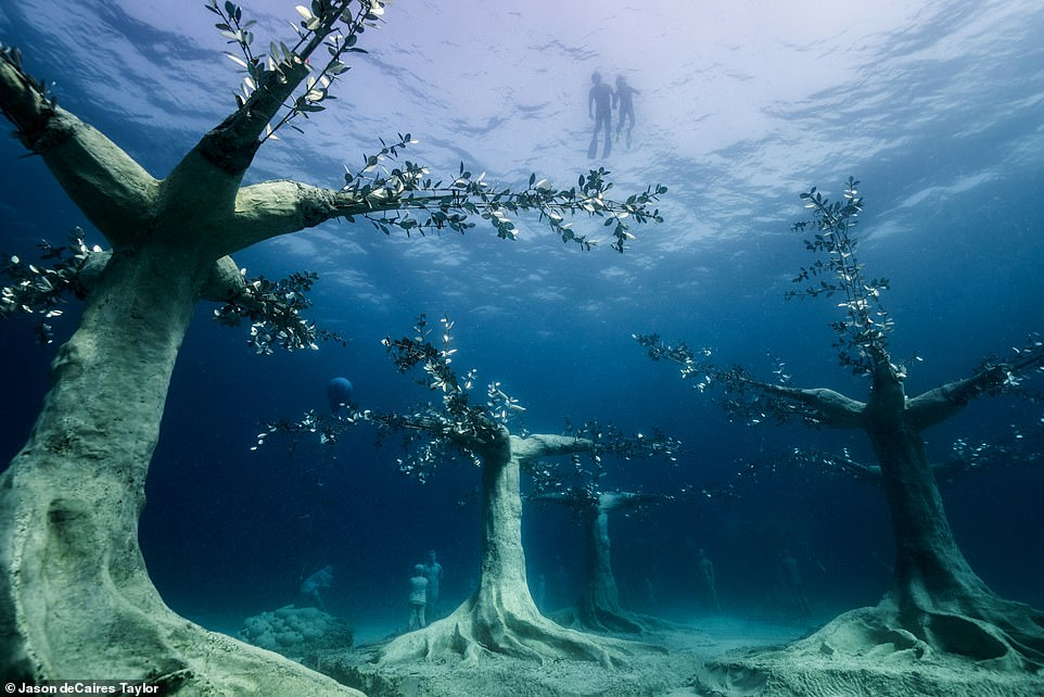 The haunting sunken forest will attract marine life in years to come, nurturing the Mediterranean's ecosystem