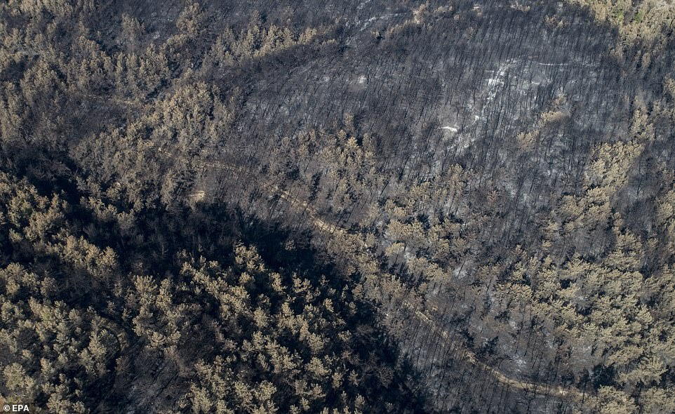 The devastation across Turkey's northern Black Sea regions came just as the disaster-hit country was winning control over hundreds of wildfires that killed eight people and destroyed swathes of forest along its scenic southern coast