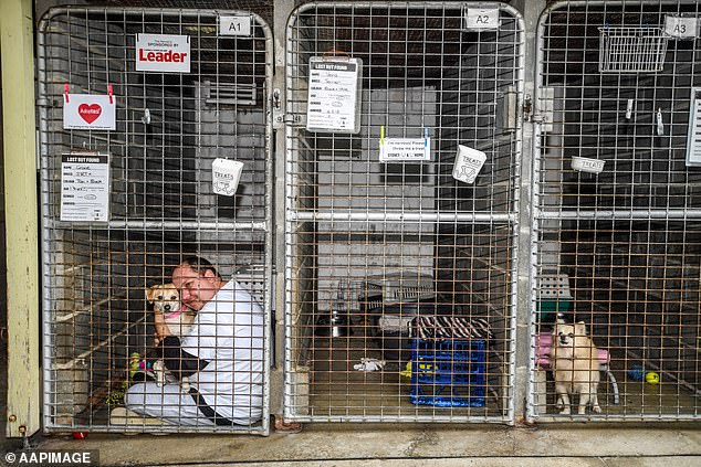 , Australian council slaughters 15 dogs including newborn puppies in Covid blunder, Nzuchi Times National News