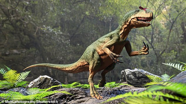 Allosaurus (pictured), which was a massive carnivore, rivalling T. rex in stature - but its feeding habits were quite different from the famous T. rex, the new study suggests