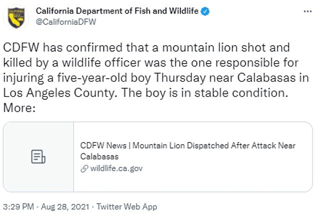 The department confirmed that they lion killed was the one that attacked the boy