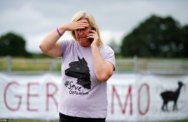 Helen Macdonald, the owner of Geronimo the alpaca, at Shepherds Close Farm in Wooton Under Edge, Gloucestershire, after the animal was taken away on a trailer to an undisclosed location