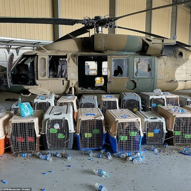 Dozens of contracted working dogs have been abandoned by the US in Afghanistan after the troop withdrawal