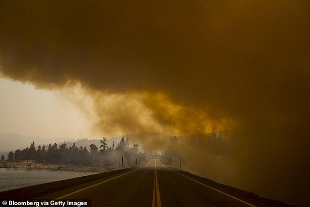 As wildfire seasons worsen on the West coast, researchers expect to see health impacts - including pre-term births - increase. Pictured: Smoke across Highway 88 in California, September 2021