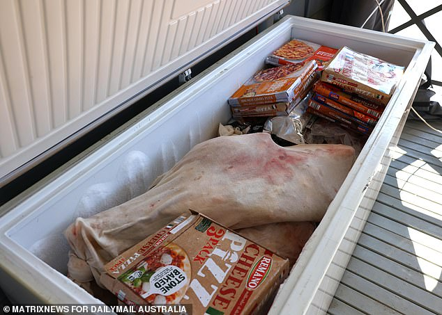 A freshly slaughtered cow was put in a freezer until it was ready to be cooked for the party on Tuesday