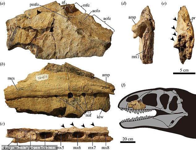 Ulughbegsaurus was identified by its left jaw bone and teeth entombed in rocks at a donosaur graveyard known as the Bissekty Formation