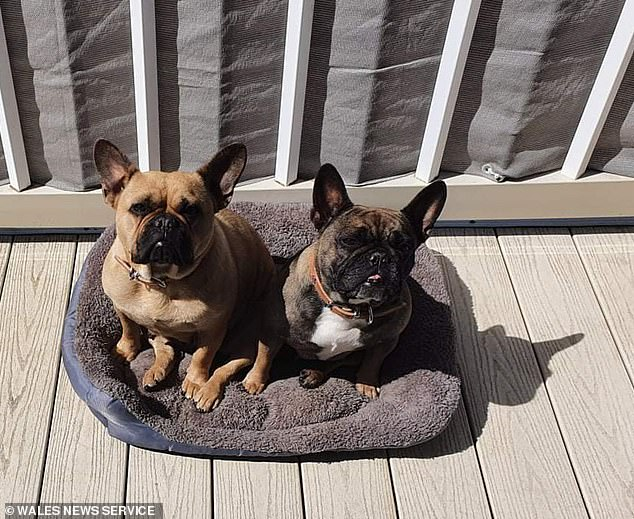 Steph her partner Steve, were horrified when four-year-olds Lila and Phab (pictured together) were found dead during last week's heatwave