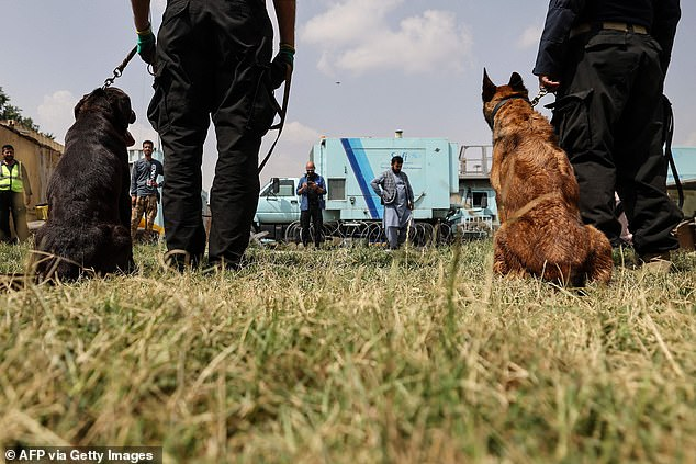 The dogs new handlers are focused on putting the dogs, thought to be able to sniff out explosives, back to work at the airport as commercial flights resume