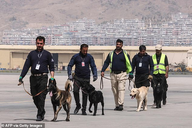 The dogs, found in Kabul Airport following the US withdrawal on August 30, are thought to be trained to sniff out explosives